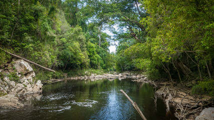 Peaceful river in deep and tropical jungle