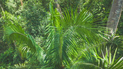 Tropical plant pattern in the jungle