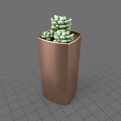 Succulent in copper planter