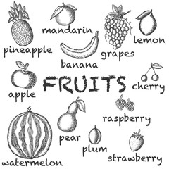 Vector image of the drawn fruit on a light background with the inscriptions under each icon. Graphic illustration.