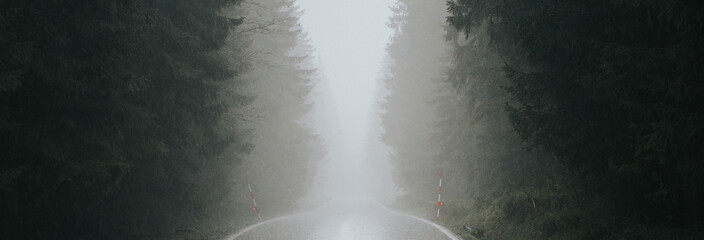 Forest foggy, rainy road. Fototapete