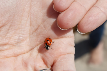 Closeup of a ladybug in a young woman's hand on a sunny day