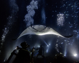 Manta Night Dive