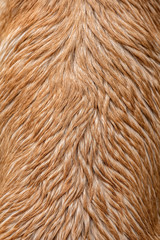 Wet Dog Fur Texture