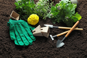 Composition with plants and professional gardening tools on soil