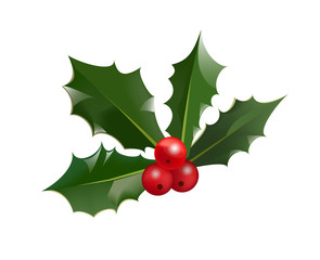 Christmas holly berry and leaves isolated on white background. Vector illustration for winter holiday symbol