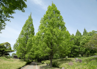 新緑の散策路 散歩道 ジョキングロード