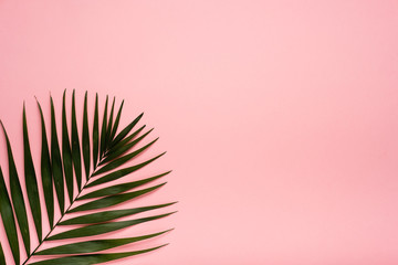 Trendy summer tropical leaves on pink background.  Bright summer color. Minimal style. Wall mural