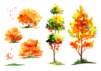 Autumn forest tree and bush set. Watercolor hand drawn illustration