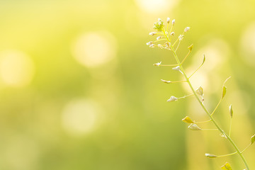 Beautiful spring flower in the meadow in the morning light. Soft focus photo.