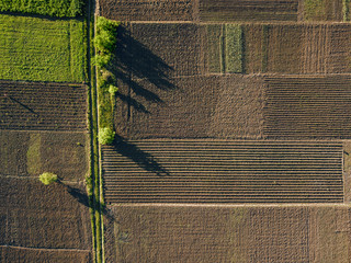 Wall Mural - aerial photo of agro, summer view of green land with fields and gardens.