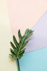 green leaf on pastel two tone background