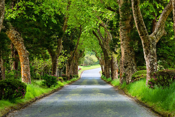 Brick road through beautiful forest close to Furnas lake on Sao Miguel island, Azores, Portugal