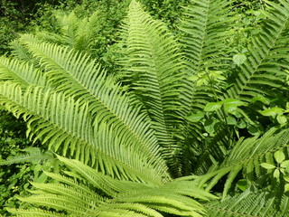 fern in th forest