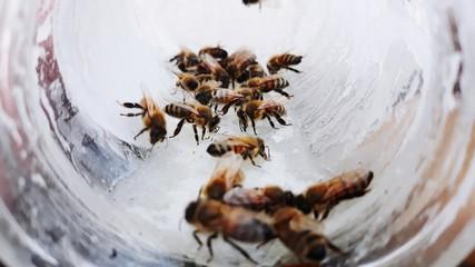 Pszczoły przy pracy