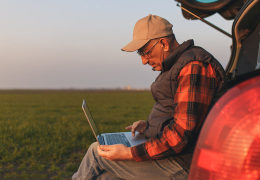 Senior farmer standing in young wheat field with laptop and examining crop.