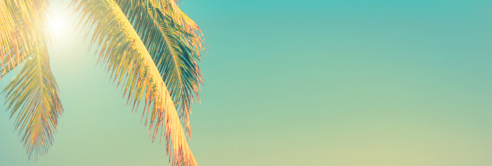 Wall Mural - Tropical beach and palm tree panoramic background, sunny sky, vintage summer concept with copy space
