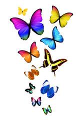 Много бабочек разной формы и разного цвета, изолированы на белом