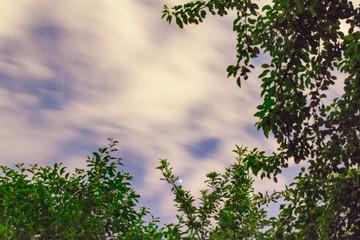 night sky and trees