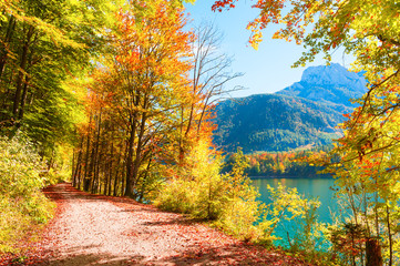 Autumn trees with colorful leaves on the shore of lake in Austrian Alps.