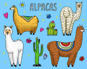 Set of cute Alpaca Llamas or wild guanaco on the background of Cactus. Funny smiling animals in Peru for cards, posters, invitations, t-shirts. Hand drawn Elements. Engraved sketch.