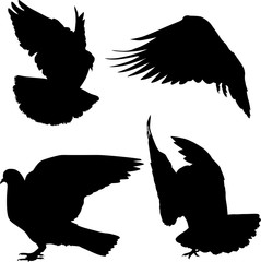 isolated four pigeon black silhouettes