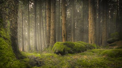 Baumstämme auf moosigem Waldboden mit bemoosten Steinen und nebligem Hintergrund  Wall mural