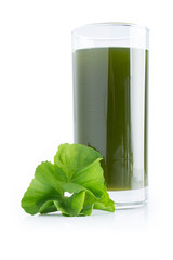 asiatic leaf juice isolated on white