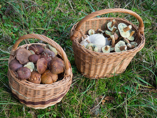 Baskets full of mushrooms