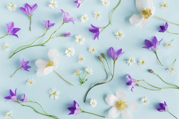 Fototapete - Creative flat layout of wildflowers, composition top view.