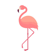 Nature - Animal -  Flamingo - Flat Illustration - Pink Tropical Bird Isolated on White Background