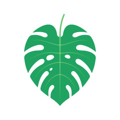 Nature - Plant - Monstera Deliciosa - Flat Illustration - Dark Green Tropical Leaf Isolated on White Background