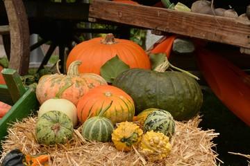 Verschiedene Kürbisse im Herbst