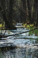 Potok w Kampinoskim parku narodowym w polsce w lecie