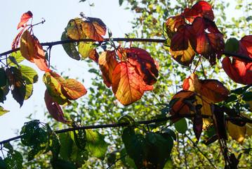 Blätter im Gegenlicht