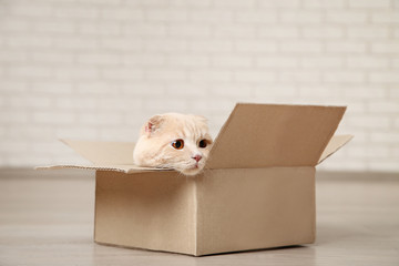 Ginger cat lying in the cardboard box