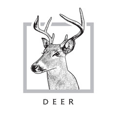 Deer head - black drawing isolated on white background. Vector illustration of stags deer head in vintage style, graphic engraving design element for logo, pattern portrait of cute animal.