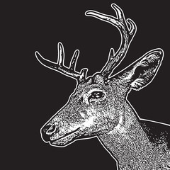 Deer head - graphic engraving illustration isolated on black background. Vector image of stags deer head in vintage style, portrait of cute horned animal. Symbol of hunting trophy.