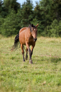 Senior, Aged Healthy Horse in the Pasture during the Summer