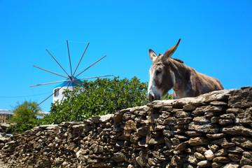 Donkey in a blue sky in Greece