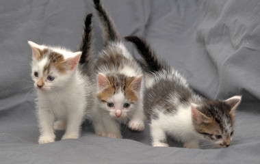 Three kittens against a gray background