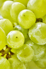 Close up picture of green grapes, selective focus.
