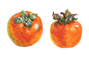 Hand drawn persimmons. Watercolor fresh fruit on white background. Painting isolated illustration