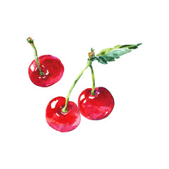 Watercolor fresh cherry. Hand drawn summer berries on white background. Painting food illustration