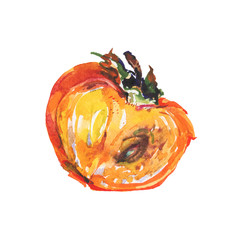 Hand drawn half of persimmon. Watercolor fresh ripe fruit on white background. Painting isolated illustration