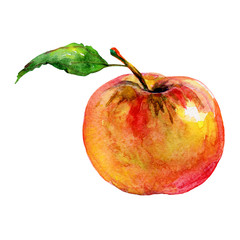 Hand drawn red orange apple. Watercolor fresh fruit on white background. Painting isolated illustration