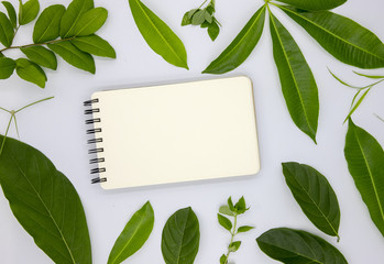 Blank spiral notepad and green summer leaves on white background. Empty page of paper notebook flat lay photo.