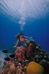 Caribbean Diver 2