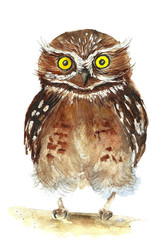 Funny brown owl with yellow eyes /watercolor illustration