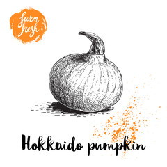 Hand drawn sketch hokkaido pumpkin. Healthy nutrition vector illustration poster. Isolated on white background.